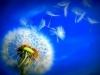 dmuchawiec - zdjęcie na stronę.jpg